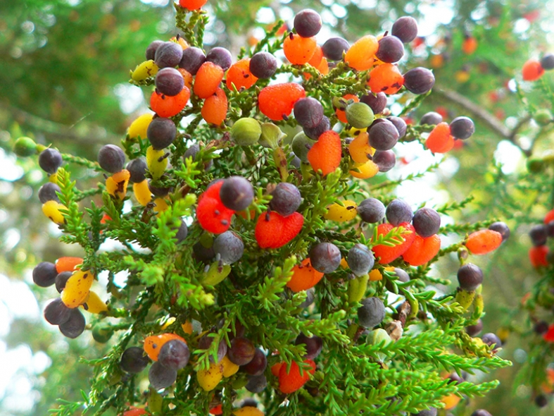 Un rbol que da 40 frutos distintos incre ble pero cierto for Arbol con raices y frutos