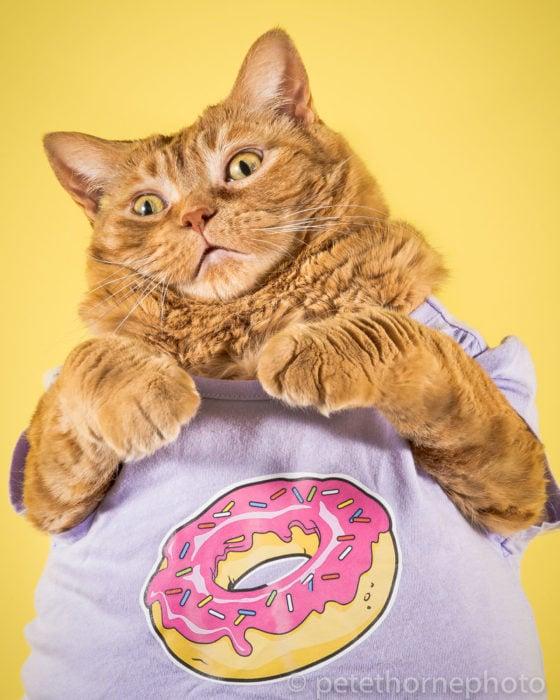 Gatos gordos, gato con playera de dona