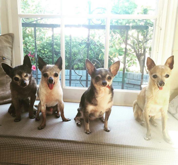 perritos felices
