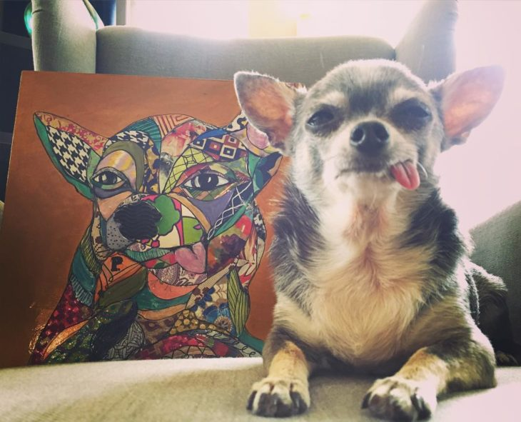 perrito viejito con la lengua de fuera