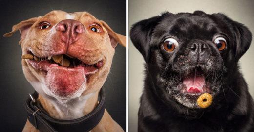 cover-expresiones-perros