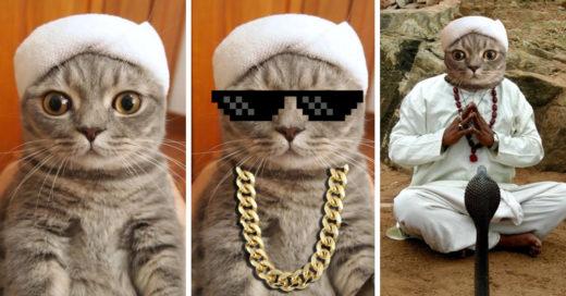 cover-gato-toalla