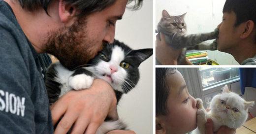 Cover-gatos-odian-duenios
