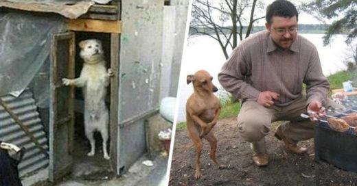 cover-perros-humanos