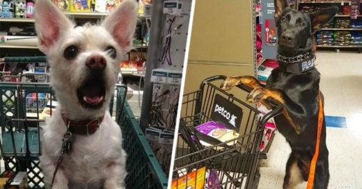 cover-perros-supermercado