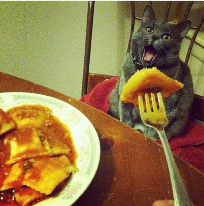 Enamórate de... gato viendo comida