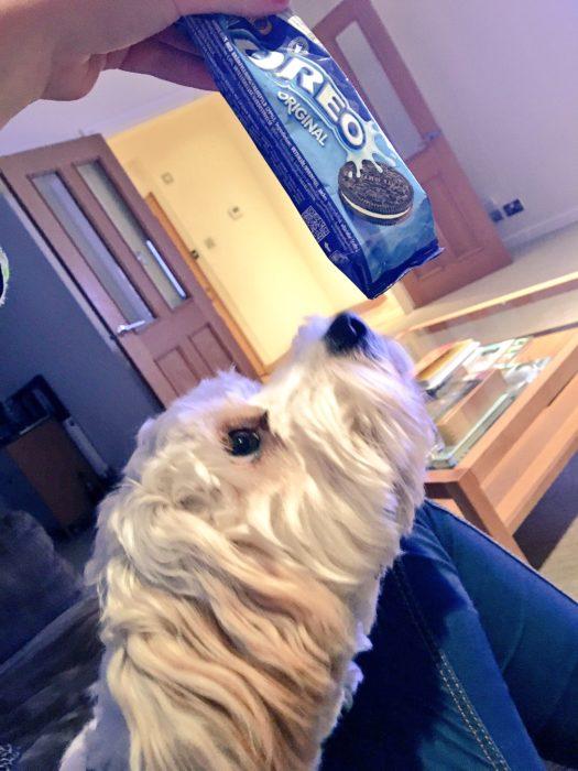 Enamórate de... perro viendo una galletas