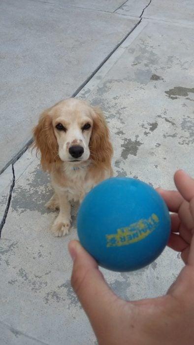Enamórate de... perro viendo pelota