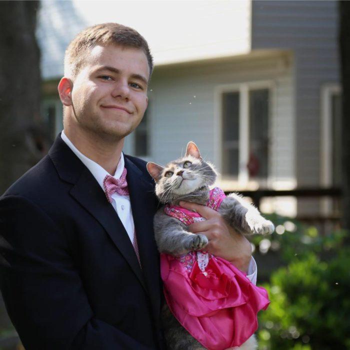 Enamórate de... gata viendo a su dueño