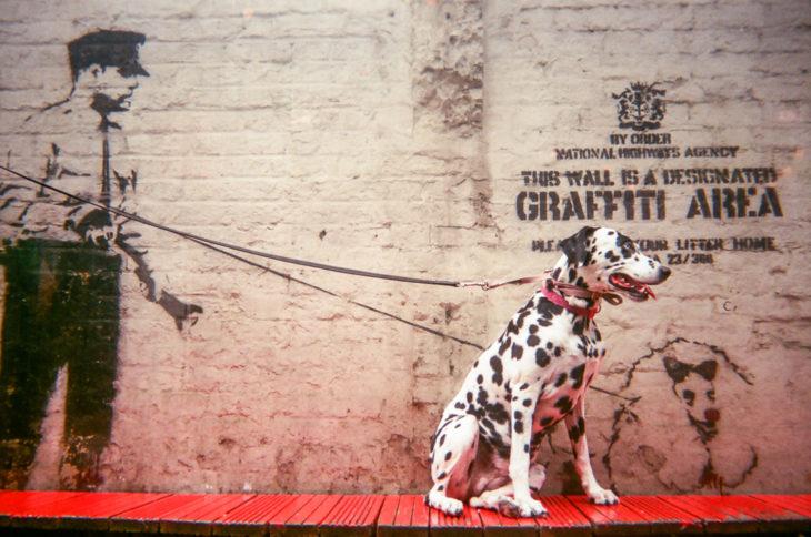 FOTOGRAFÍA DEL DÁLMATA JUNTO A UN POLICIÁ EN UNA GRAFFITI