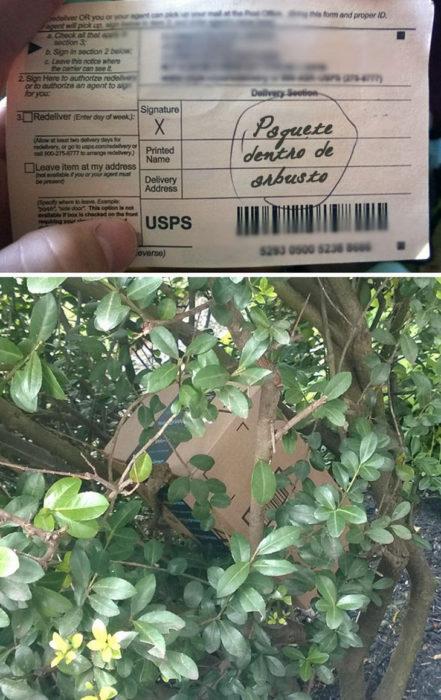 Paquete escondido en el arbusto