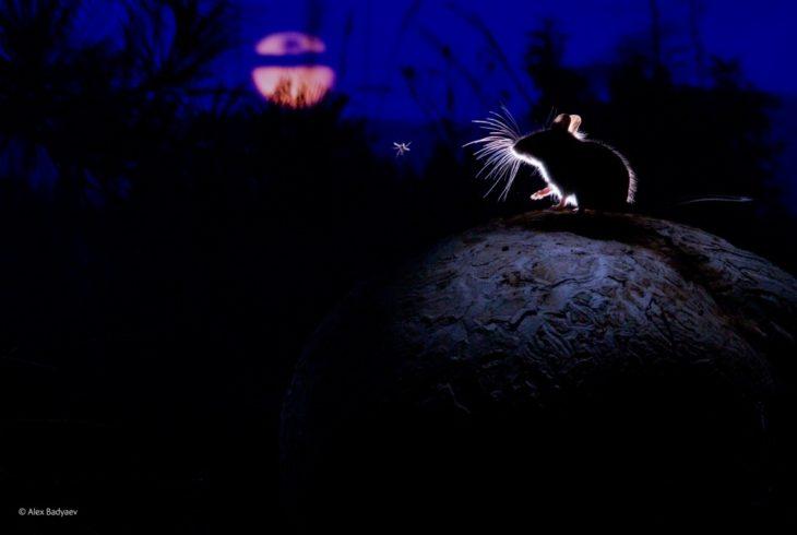 Fotos impresionantes y hermosas. Un raton en la oscuridad