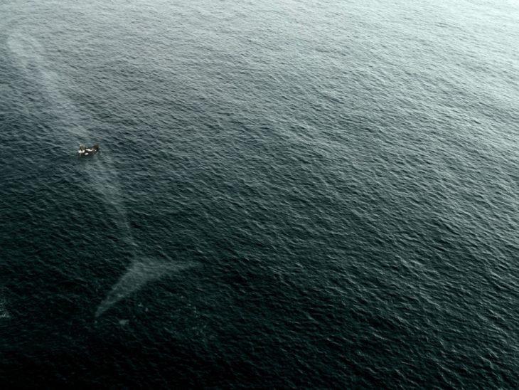 Fotos impresionantes y hermosas. una ballena justo abajo de una barca