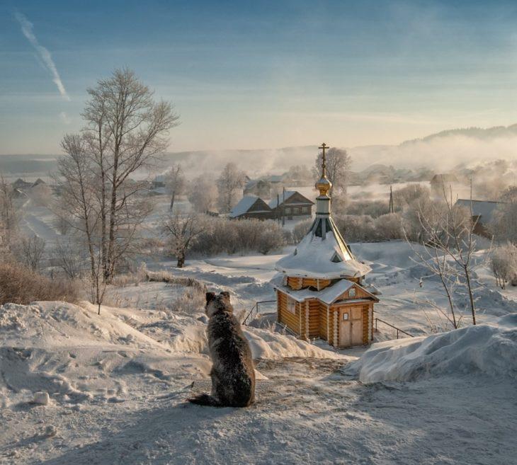 Fotos impresionantes y hermosas. Perro en un paisaje nevado