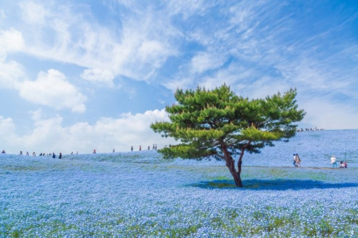 Fotos impresionantes y hermosas. Un arbol en medio de un jardin azul