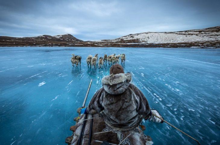 Fotos impresionantes y hermosas. Lobos arrastrando a un esquimal