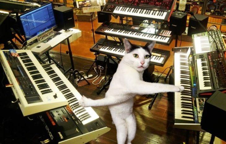 gatito tocando el teclado de su casa
