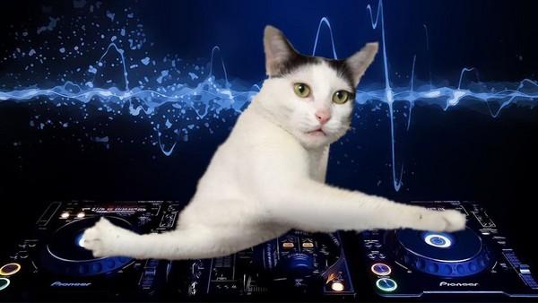 GATITO DE DJ