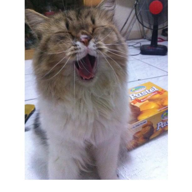 gatito feliz al momento en que su dueña le habla
