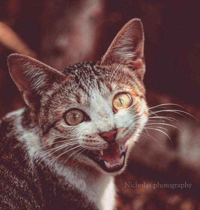 gato sonrisa muy feliz