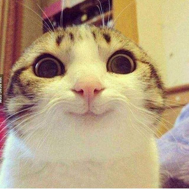 gatito carita feliz