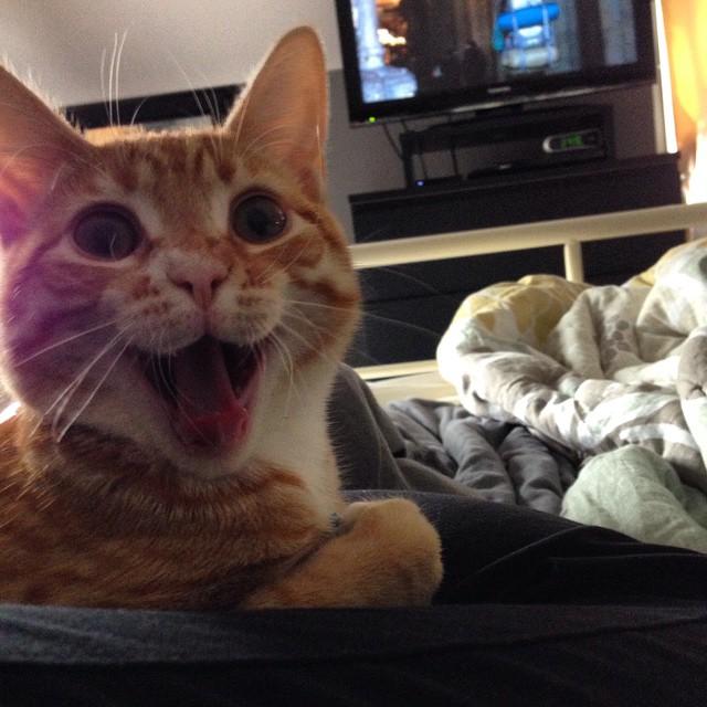gato sonriendo muy muy gfeliz
