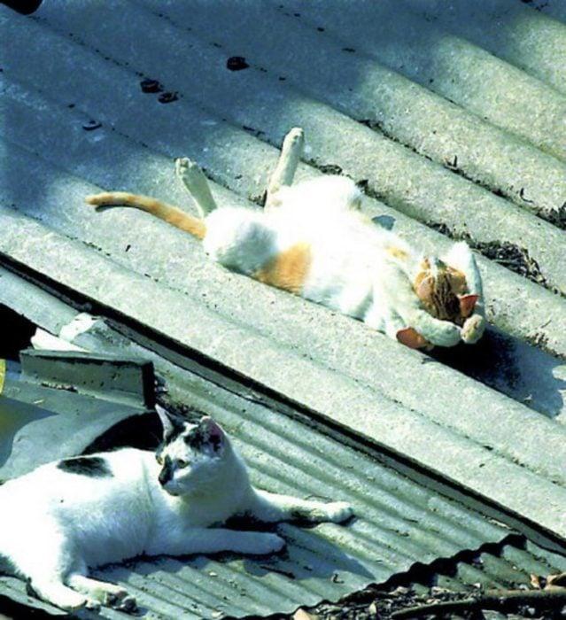 Gatos dormidos en el tejado