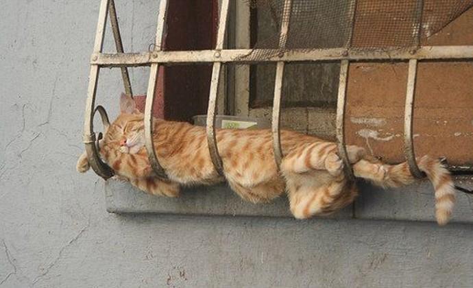 gato acostado en los barrotes e una ventana