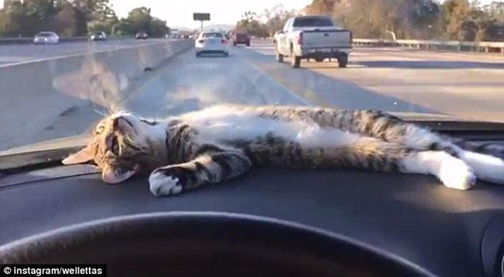 gato acostado en la parte de arriba de un carro