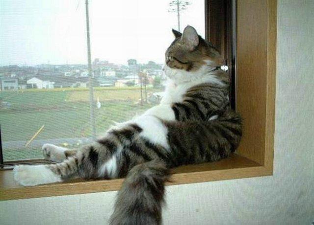 gato mirando al horizonte por la ventana
