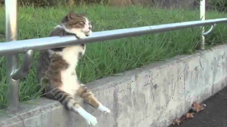 gato relajado en la esquina de una banqueta justo antes de pasar