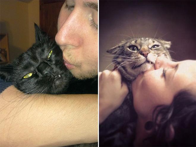 caras de enojo en los gatos