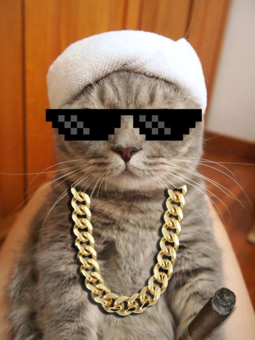 Batalla PS - gato thug life