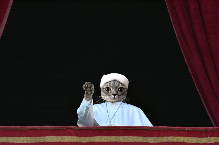 Batalla PS - gato como el Papa