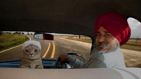 Foto tierno gatito con su toalla épica batalla de Photoshop