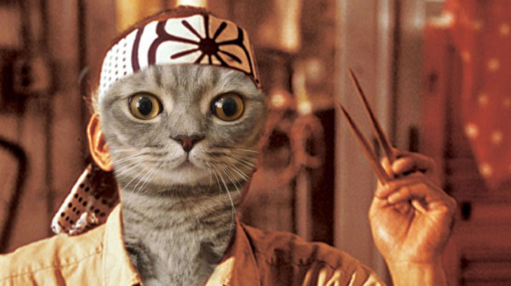 Batalla PS - gato karate kid