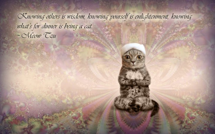 Batalla PS - gato frase inspiracional