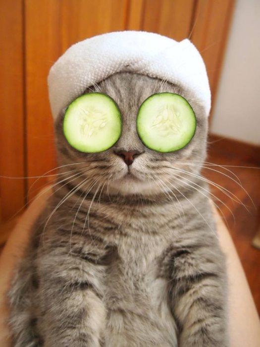 Batalla PS - gato con pepinos en los ojos