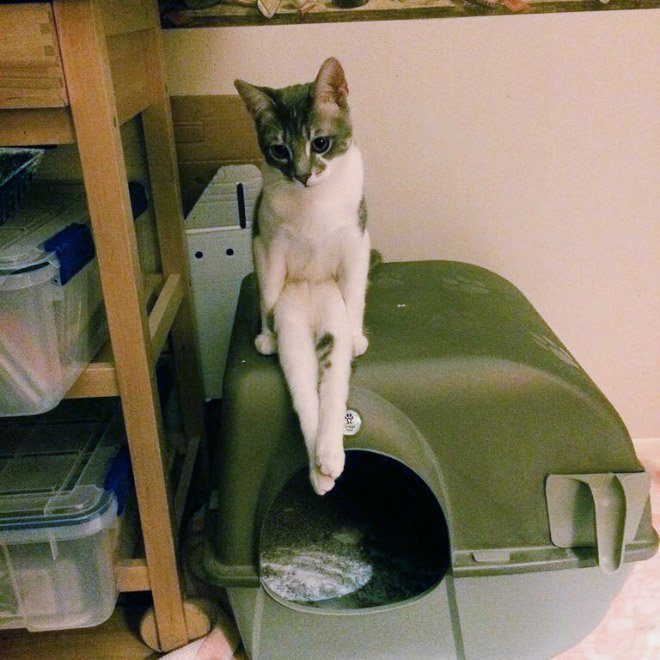 Gato sentado como humano arriba de su casita