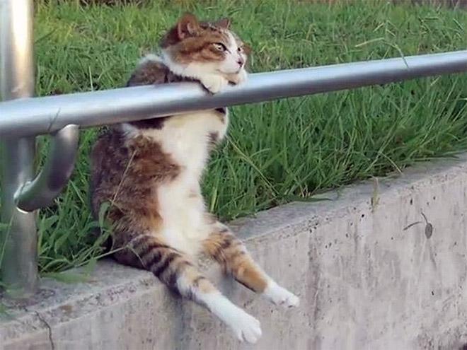 Gato sentado apoyado en un barandal
