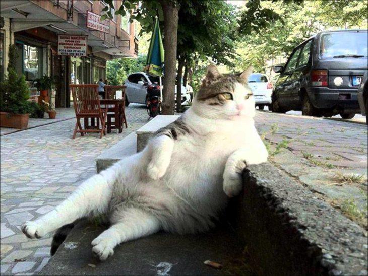 Gato sentado con pose de galán