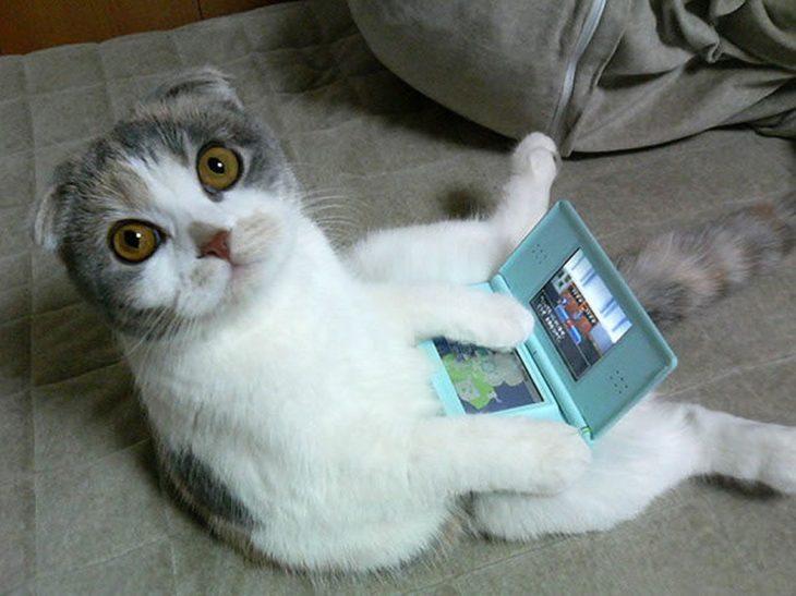 Gato sentado mientras juega
