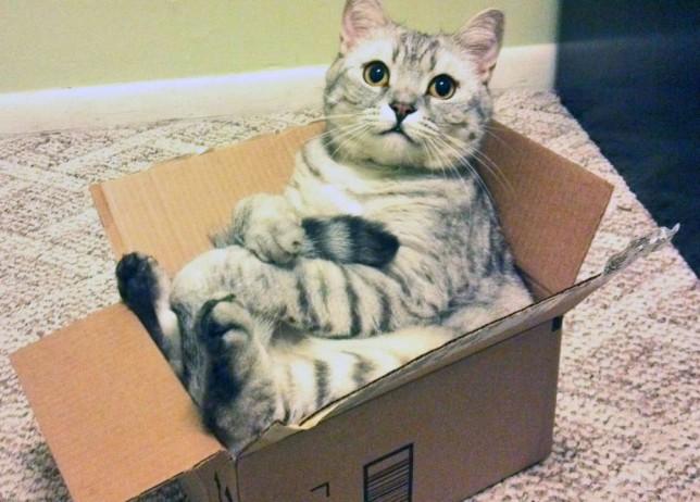Gato sentado en su caja para dormir