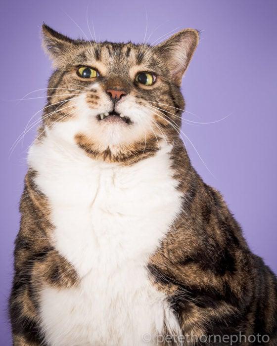 Gatos gordos - gato con cara de desagrado