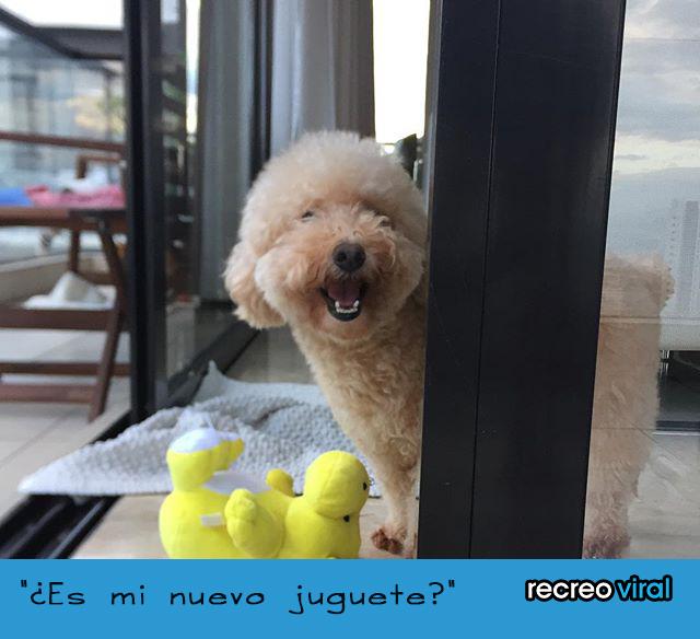 Lo que piensa tu perro cuando te ve desnudo - es mi juguete