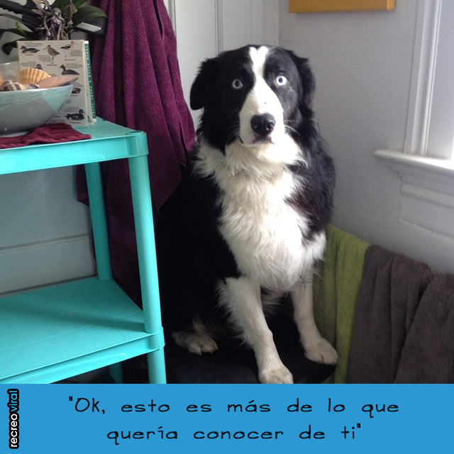 Ok, esto s más deLo que piensa tu perro cuando te ve desnudo - lo que quería conocer de ti