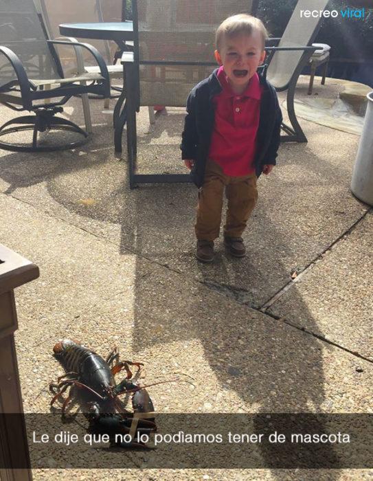 niño llora porque no lo dejan tener una langosta de mascota