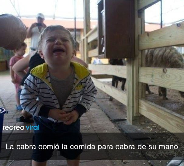 niño llora porque la cabra se comio su comida