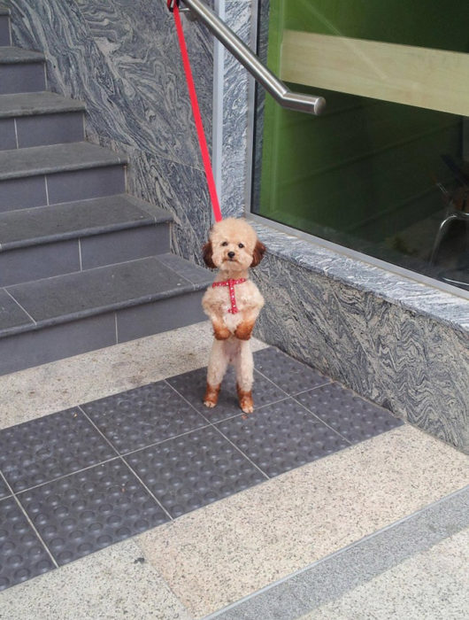 perrito esperando a que lo deshaten de las escaleras