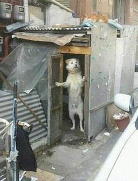 perrito parado parece que le esta abriendo la puerta a alguien
